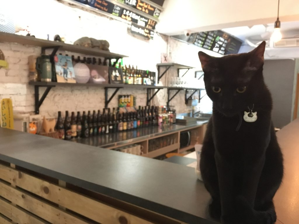 One of the residents of Beer Cat bar in Zhongshan, one of the fun things to do in Taipei