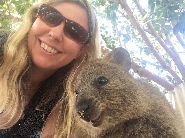 There are 12,000 quokkas on Rottnest Island near Perth. Despite the odds it still took three visits and 200 pictures to finally get a picture.