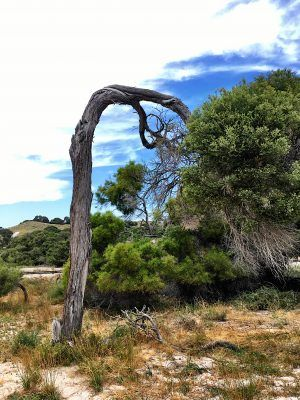 You can find some amazing sights on Rottnest Island, near Perth