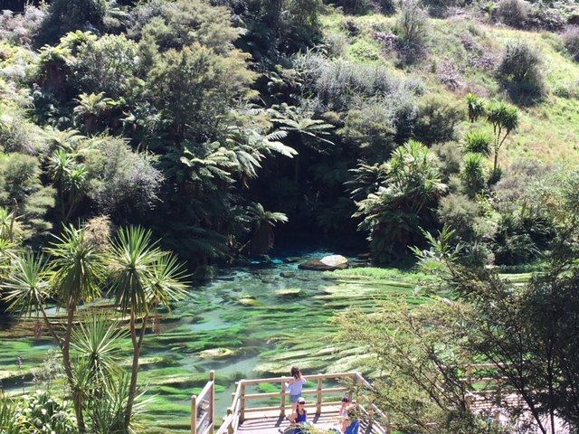 The Putaruru Blue Spring in New Zealand's North Island is a stunning bright blue pool and river.It's just a short drive from Auckland to Blue Spring