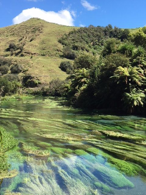 This stunning blue pool is the Putaruru Blue Spring in New Zealand's North Island It's easy to get form Auckland to Blue Spring Putaruru in under two hours.