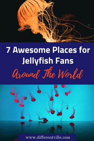 If you love jellyfish, high five! We do too - which is why we were so excited about a new place to see them in Birmingham in the UK - but it's not the only cool place to watch them. Check out our best ideas for jellyfish fans. #jellyfish #aquariums