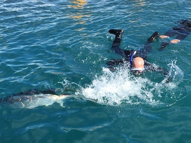 Swimming with the tuna at Oceanic Victor in South Australia