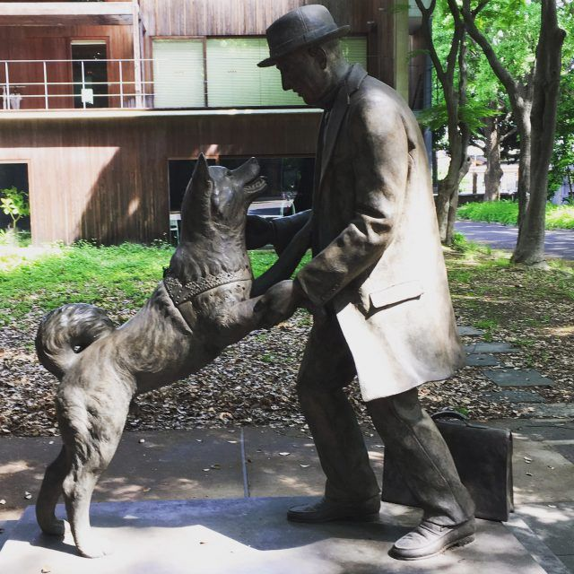 Looking for things to do in Tokyo before breakfast. Why not take a tour of all the Hachiko statues in the town.