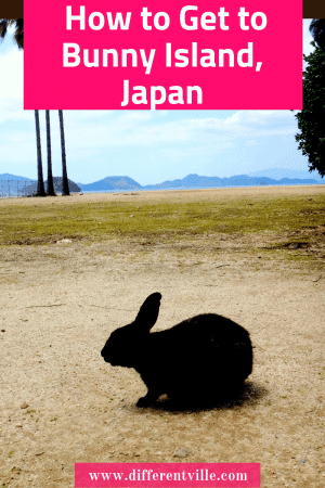 black bunny on some sand with palm trees behind him on Bunny Island in Japan