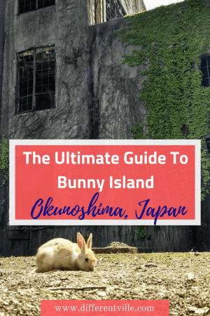 Small beige rabbit eats grass next to an abandoned building on Rabbit Island, Japan