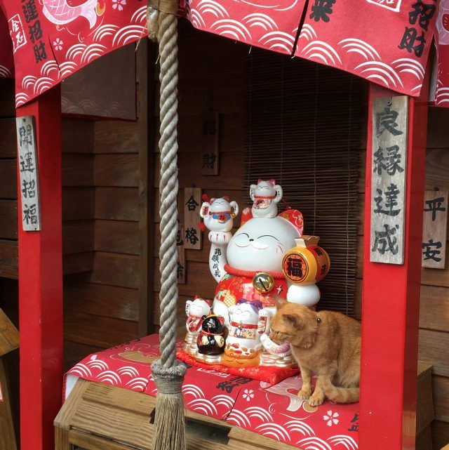 Houtong Village near Taipei is home to hundreds of stray cats. It makes an unusual day trip from Taipei