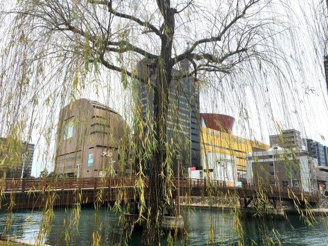 Old wooden bridge in Kokura photographed with a willow tree in front