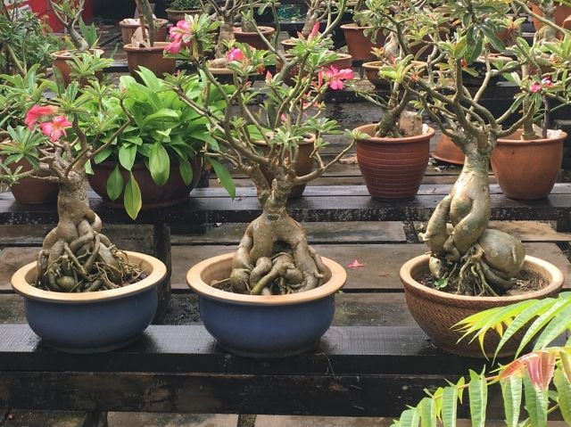 Three plants that look like Mandrakes from Harry Potter