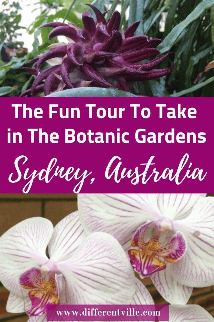 Flowers you see on the Sensory Tour Botanic Gardens Sydney
