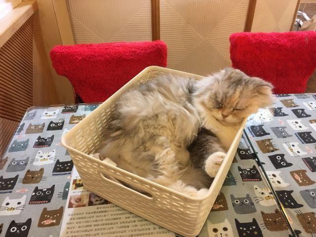 cat asleep in a basket