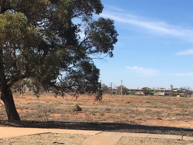 Very small emus in Woomera