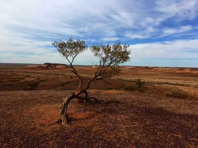 tree overlooing the red rocks of the Breakaways