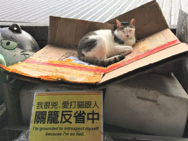 Cat on a cardboard box with a sign underneath saying 'I am grounded to introspect myself because I am so bad'