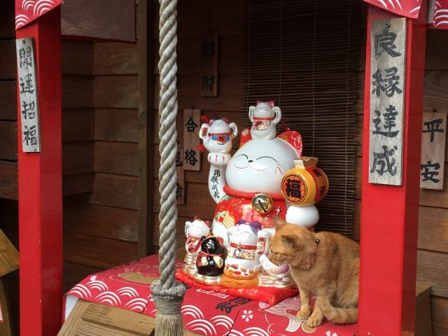 cat on a shrine at Houtong Cat Village