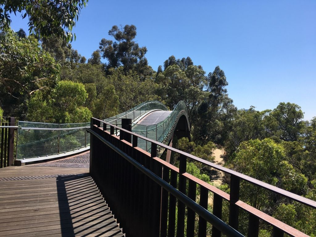 Glass walkway stretching into the distance in Kings Park, Perth