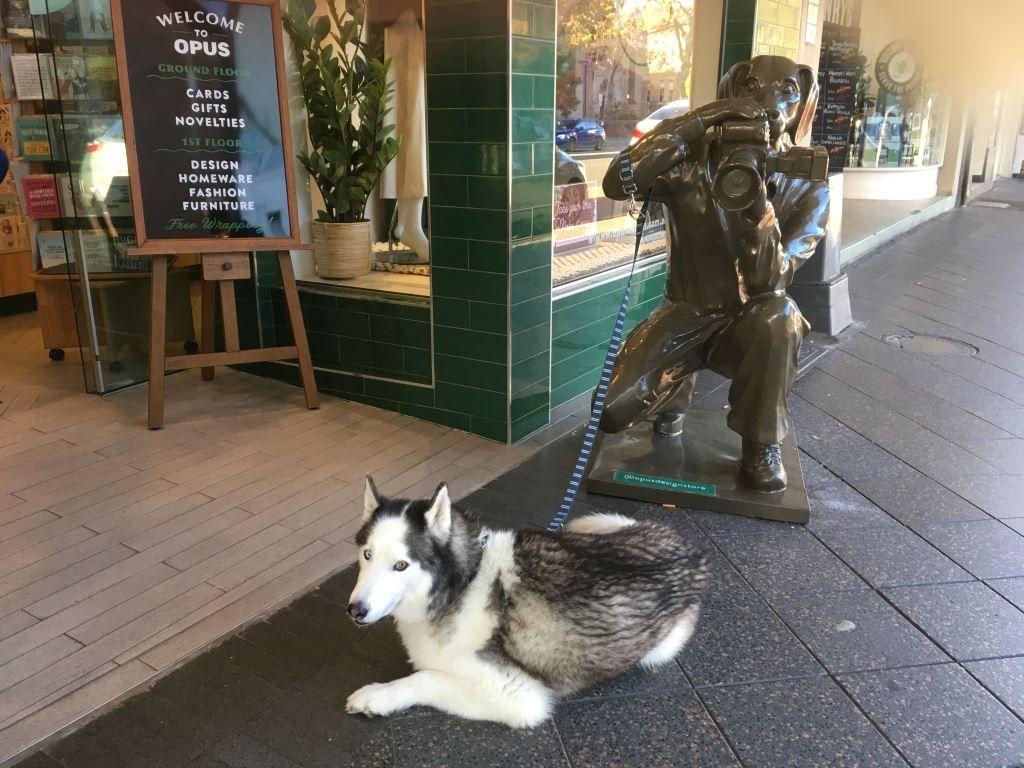 Sculpture of a dog with a camera, Paddington Sydney