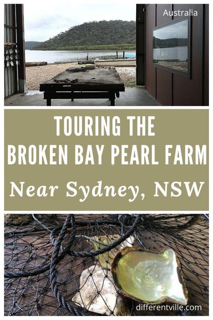the Broken Bay Pearl Farm Tour