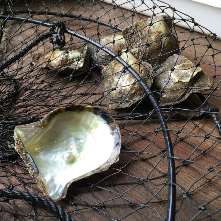 Oyster containing a pearl in a fishing net taken at Broken Bay Shellar Door near Sydney