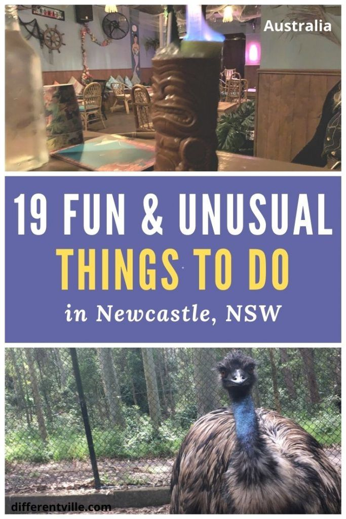 pin on fun and unusual things to do in Newcastle, NSW